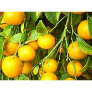 Apelsīna ēteriskā eļļa, 7x destilēta
