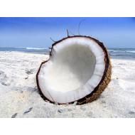 Kokosriekstu eļļa BIO, auksti spiesta