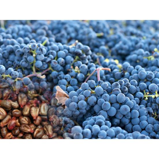 Vīnogu kauliņu eļļa, rafinēta