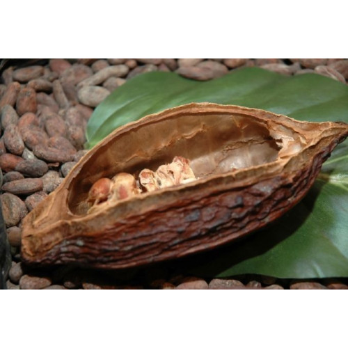 Kakao sviests